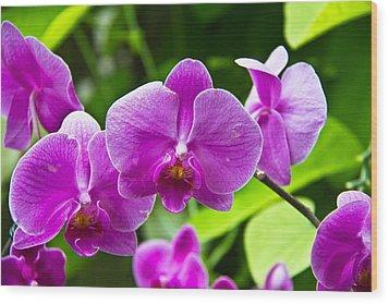 Purple Flowers In A Bunch Wood Print