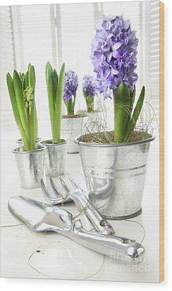 Purple Hyacinths On Table With Sun-filled Windows  Wood Print by Sandra Cunningham