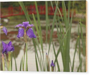Purple Iris Wood Print by Coby Cooper