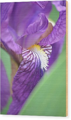 Wood Print featuring the photograph Purple Iris by JD Grimes