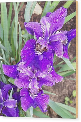 Purple Iris With Water Droplet Wood Print