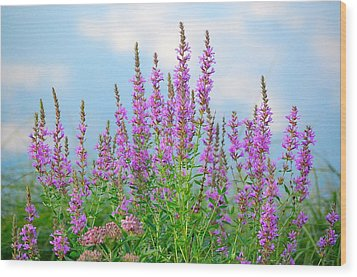 Purple Loosestrife II Wood Print by Mary McAvoy