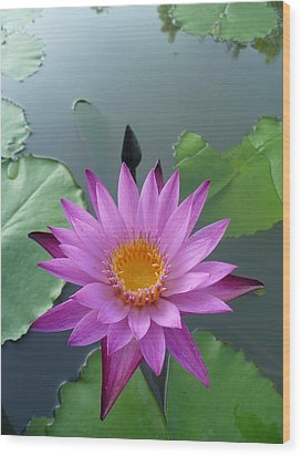 Purple Lotus In A Pond Wood Print by Gregory Smith