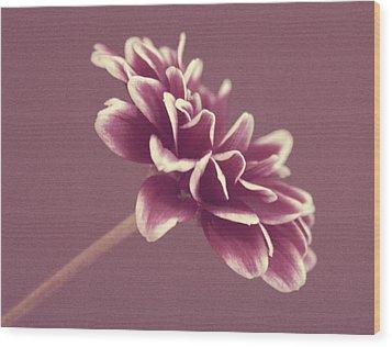 Purple Mum Wood Print by Cathie Tyler