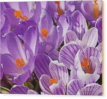 Purple Oh Purple Wood Print