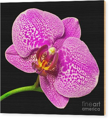 Wood Print featuring the photograph Purple Orchid Bloom by Michael Waters