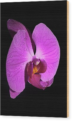 Purple Orchid Wood Print by Nick  Shirghio