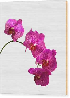 Wood Print featuring the photograph Purple Orchid On White by Michael Waters