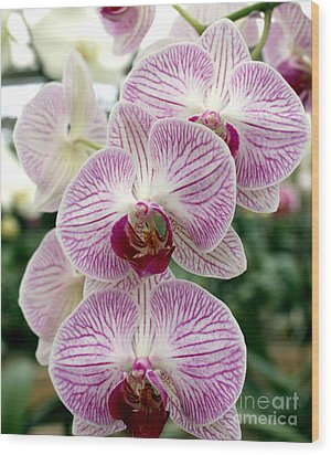 Wood Print featuring the photograph Purple Orchids by Debbie Hart