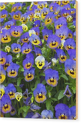 Wood Print featuring the photograph Purple Pansies 1 by Robert Decker