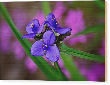 Purple Passion Wood Print by Marty Koch