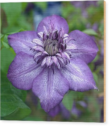 Purple Perfection. Wood Print by Terence Davis