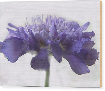 Wood Print featuring the photograph Purple Pincushin by Debbie Portwood