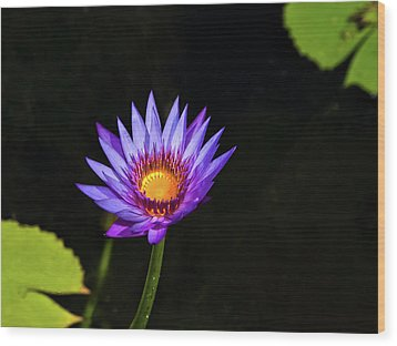 Purple Water Lily Wood Print by Sandra Anderson