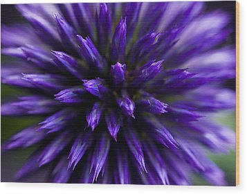 Wood Print featuring the photograph Purple Zoom by Trevor Chriss