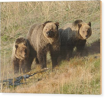 Quad Mom At Mammoth Terraces I Wood Print by Amy Gerber