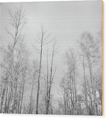 Quaking Aspens Above Santa Fe Wood Print by David Teter