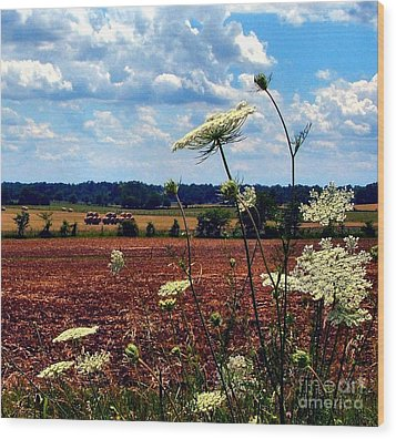 Queen Annes Lace And Hay Bales Wood Print by Julie Dant