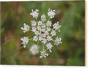 Wood Print featuring the photograph Queen Anne's Lace by Mary McAvoy