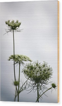 Wood Print featuring the photograph Queen Annes Lace by Penny Hunt