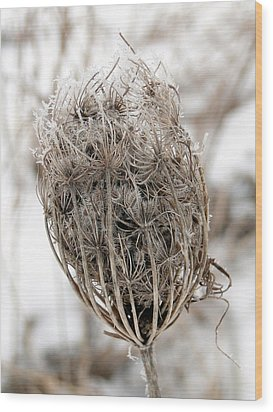 Wood Print featuring the mixed media Queen Anne's Lace Seed Pods by Bruce Ritchie