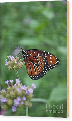 Wood Print featuring the photograph Queen Butterfly by Eva Kaufman