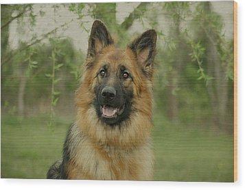 Queena - German Shepherd Wood Print by Sandy Keeton