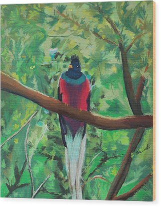 Quetzal In Costa Rica Wood Print