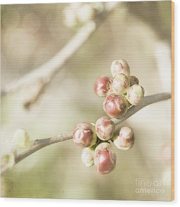 Quince Buds Close-up Wood Print