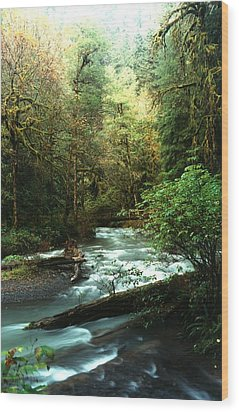 Quineault Rain Forest Wood Print by Rick Frost