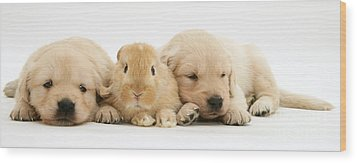 Rabbit And Puppies Wood Print by Jane Burton