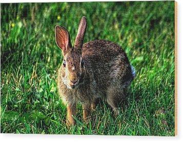 Rabbit Wood Print by Andre Faubert