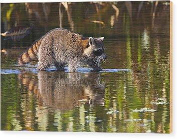 Raccoon Foraging  Wood Print by Bruce J Robinson