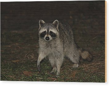 Raccoon Wood Print by Lali Partsvania