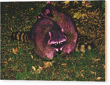 Racoons In Stanley Park Wood Print by Lawrence Christopher