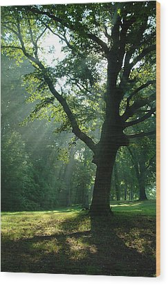 Radiant Tree Wood Print by Peg Toliver