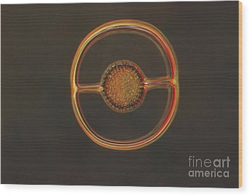 Radiolarian Lm Wood Print by Eric V. Grave