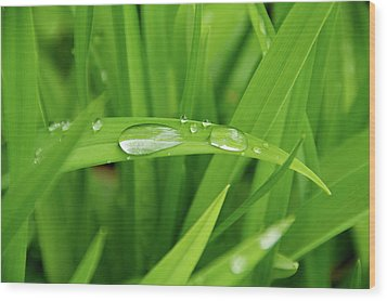 Wood Print featuring the photograph Rain Drops On Grass by Trever Miller