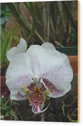 Wood Print featuring the photograph Rain Drops On Orchid by Charles and Melisa Morrison