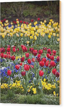 Wood Print featuring the photograph Rain On The Tulips by Cheryl Davis