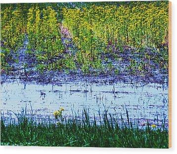 Rainbow Field Wood Print by Todd Sherlock