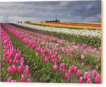 Rainbow Fields Wood Print by Mike  Dawson