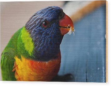 Wood Print featuring the photograph Rainbow Lorikeet by Carole Hinding