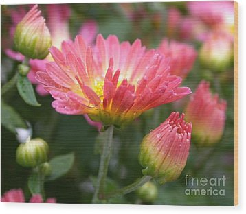 Rainbow Mums Wood Print by Living Color Photography Lorraine Lynch