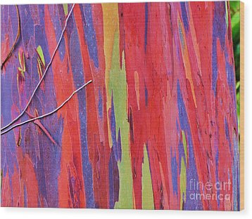 Wood Print featuring the photograph Rainbow Of Eucalyptus Bark by Michele Penner
