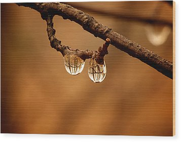 Raindrop Reflection Wood Print by Andre Faubert