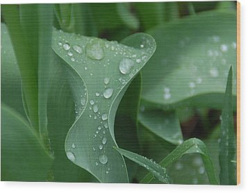 Wood Print featuring the photograph Raindrops by Aimee L Maher Photography and Art Visit ALMGallerydotcom