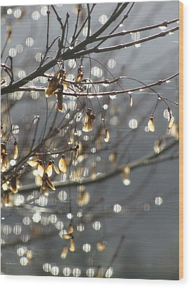 Raindrops And Leaves Wood Print