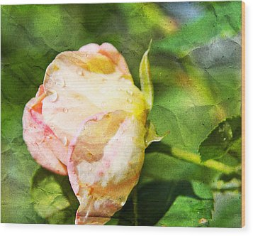 Raindrops And Roses Wood Print