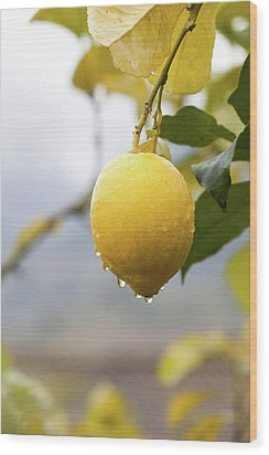 Raindrops Dripping From Lemons. Wood Print